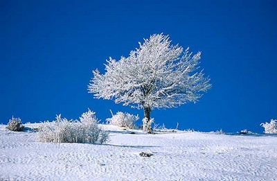 albero-con-neve-2-ridotta.jpg