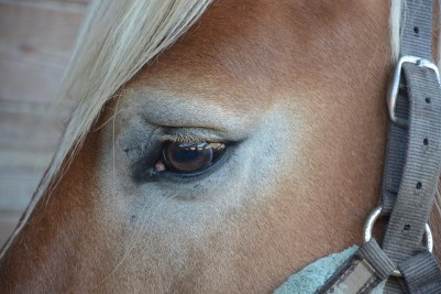 horse-2766722_960_720