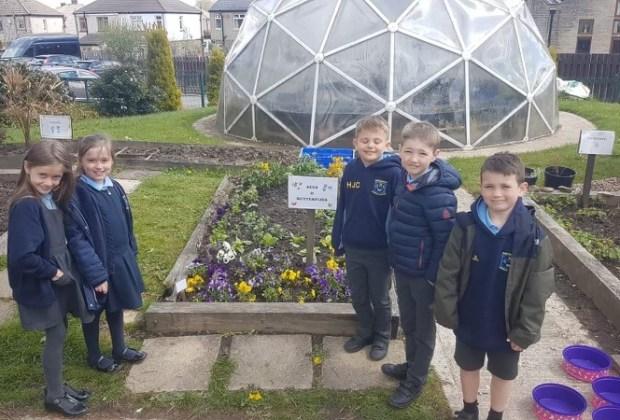 Flower Donation - Northowram Primary School-4b6852d1