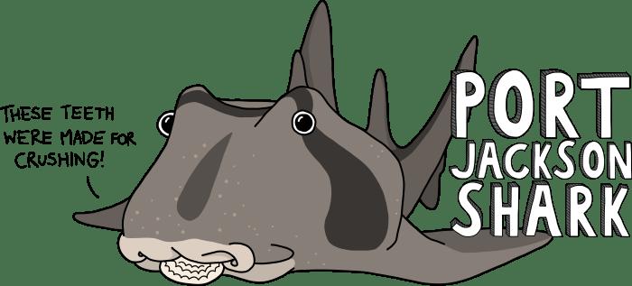 Jacko the PJ shark-700