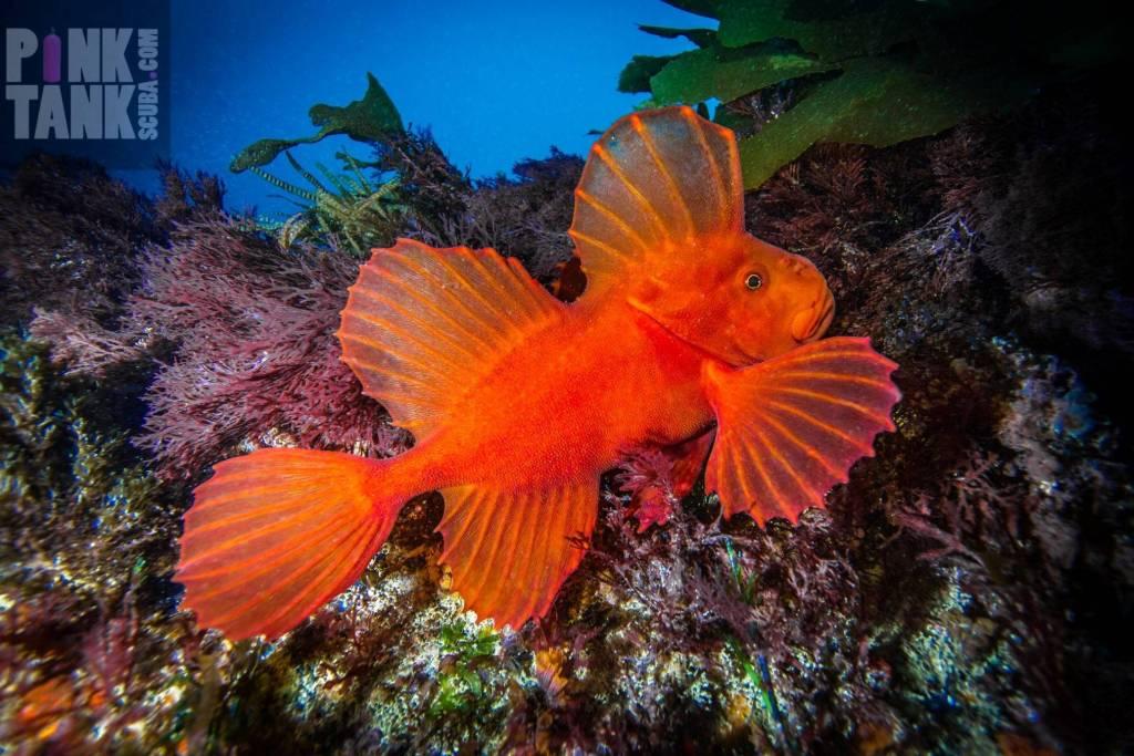 underwater photography by PT Hirschfield