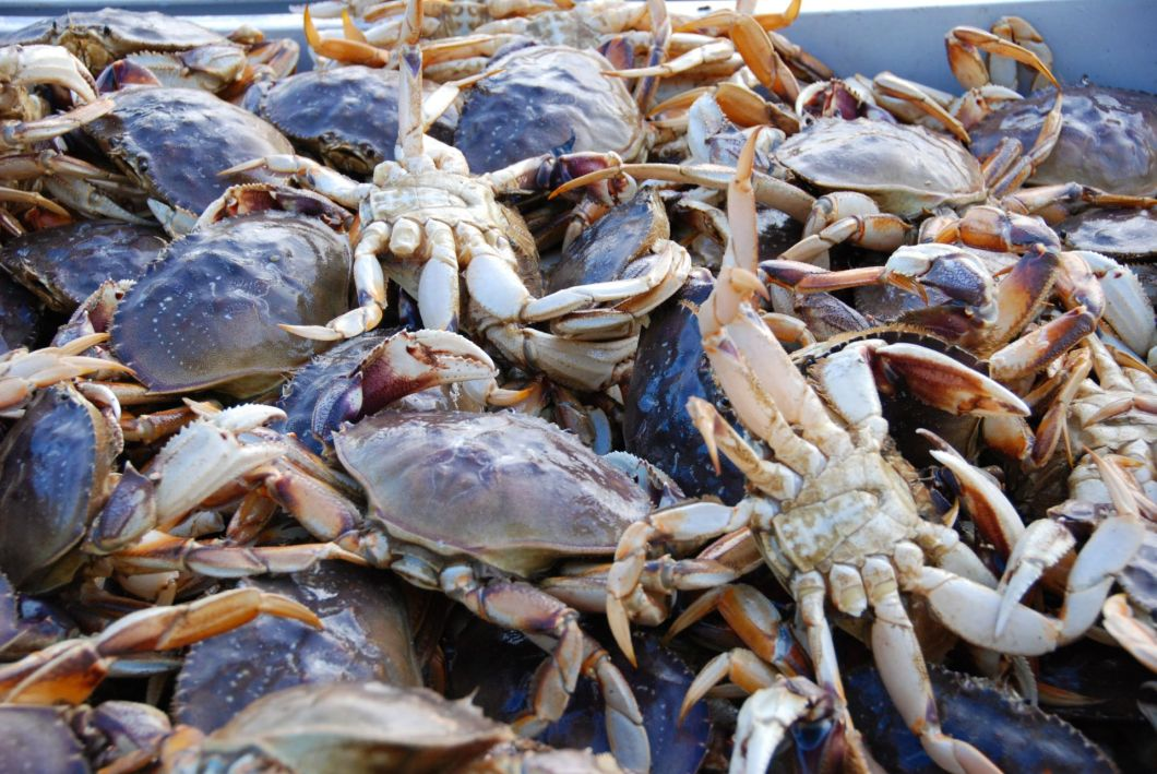 BlueCarbon-crabs-shutterstock_3148418-1920-80