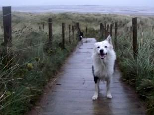 Dog Friendly Furness