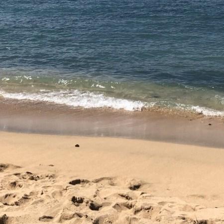 On the beach in Maui