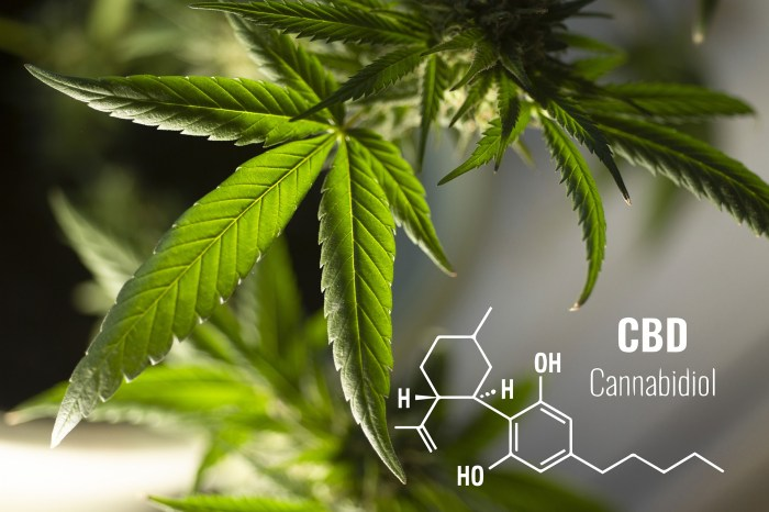 CBD Cannabidiol oil benefits with plant