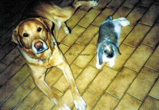 04 Djuriskt Rasmus och kaninen ligger