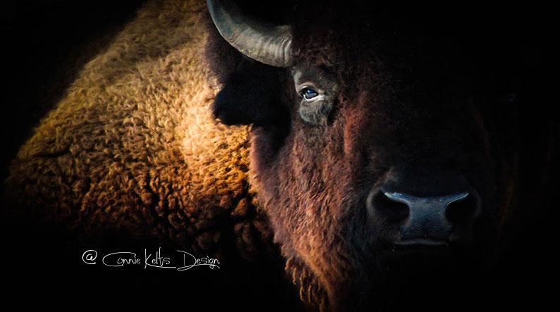 Buffalo Shadow