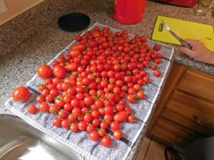 tomatoes001