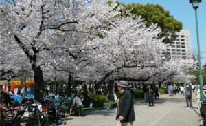 Hanami, observación de flores
