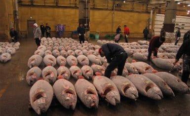 consumo de pescado en Japón