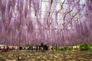 Parque floral de Ashikaga