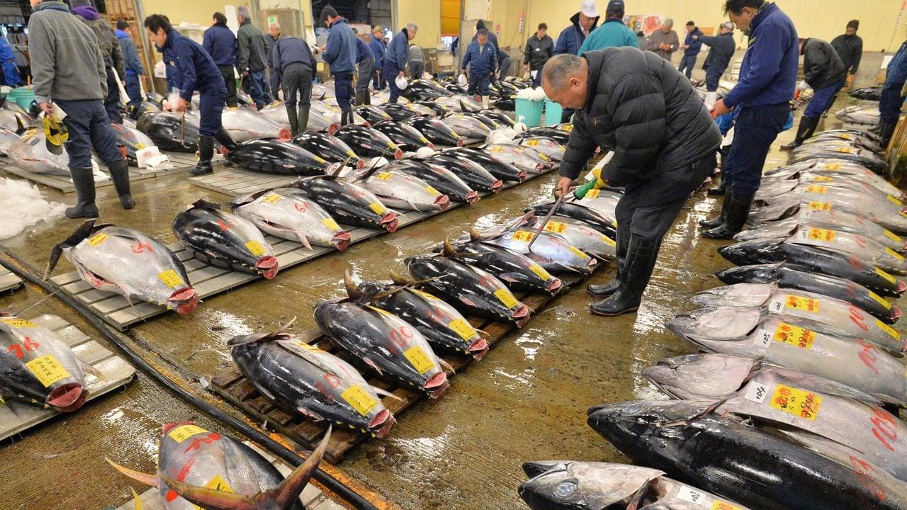 Subasta de atún en el mercado de Tsukiji