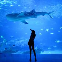 Visita el New York City Aquarium