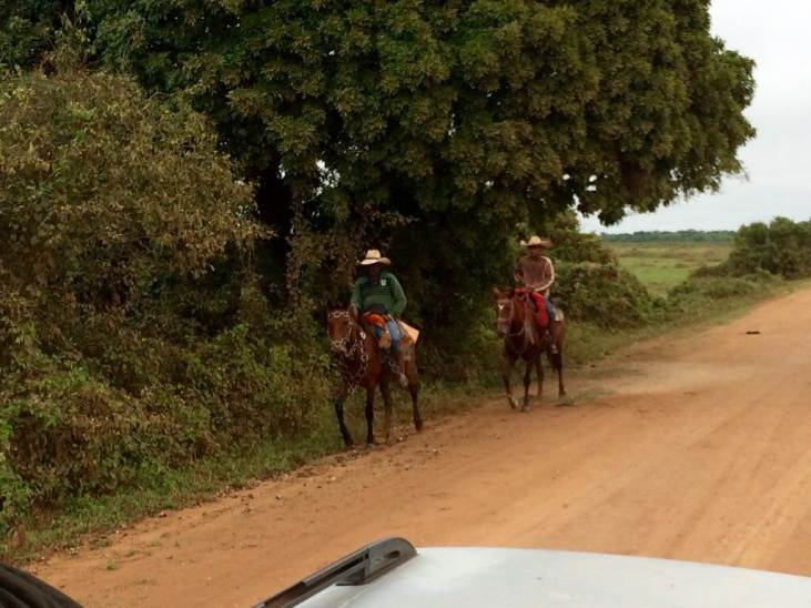 viajar al pantanal de brasil - caballos excursiones