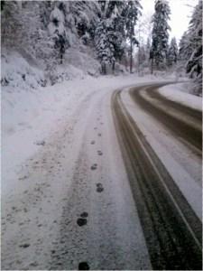 luca-road
