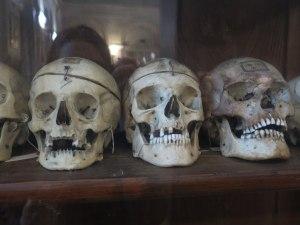 museo antropologia criminale cesare lombroso torino