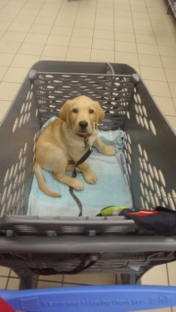 his first shopping trip