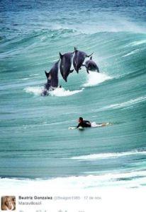 Surf entre delfines