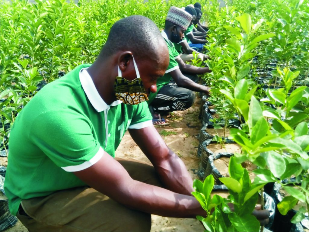A Nigerian horticulturist, Ibrahim Salisu, has embarked on gathering and replanting millions of plant and flower species in Kaduna to save them from becoming extinct. Salisu, the General Manager of Teku International Farm, said on Thursday during a press conference in Kaduna that he was working hard to restore many endangered plants from the brink […]
