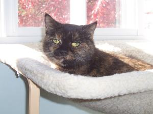 Euthanasia: To Be With Your Cat, or Not? - The Conscious Cat