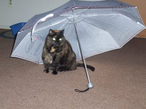 umbrella-004