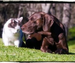 cat_and_dog_on_grass