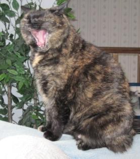 Amber yawning