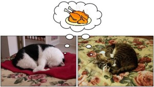Thanksgiving_Cats