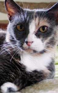 Eva-miracle-cat-rescue