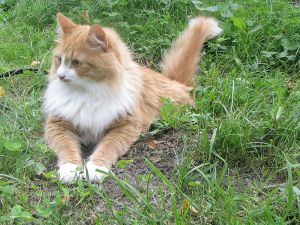 cats 101 breeds