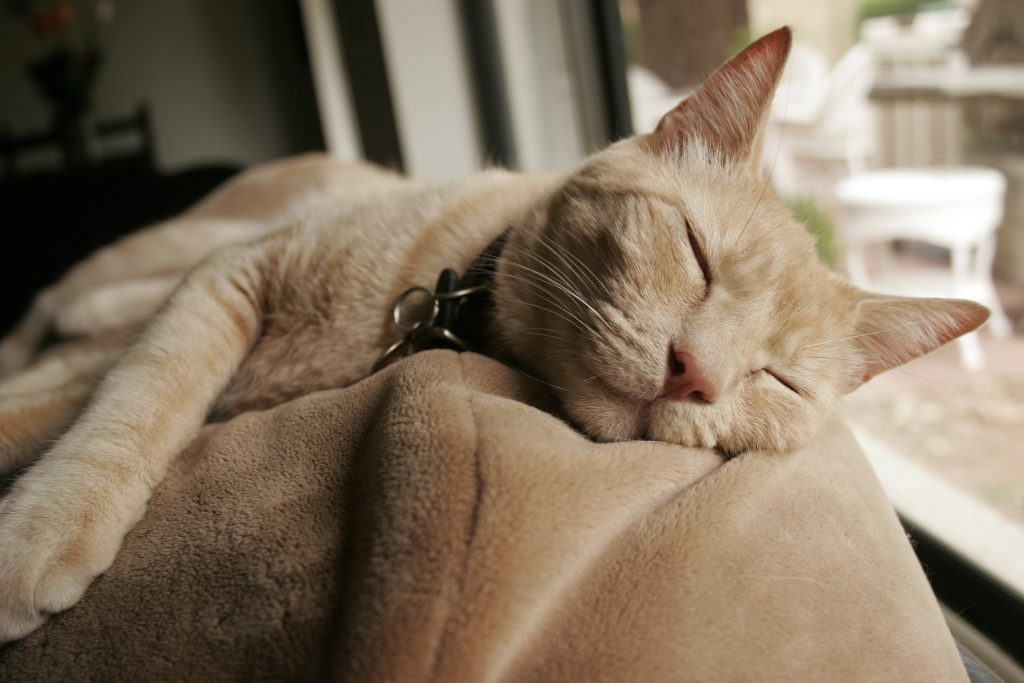 https://i2.wp.com/consciouscat.net/wp-content/uploads/2010/11/old-cat-sleeping.jpg
