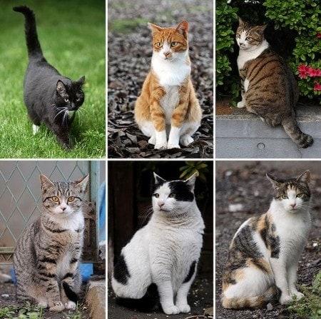 cat_genome