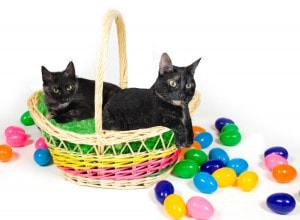 Happy Easter from The Conscious Cat
