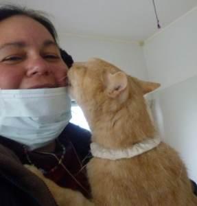 animal rescue Japan