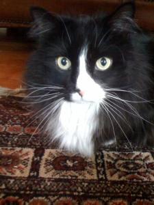 Clea Simon's cat Musetta