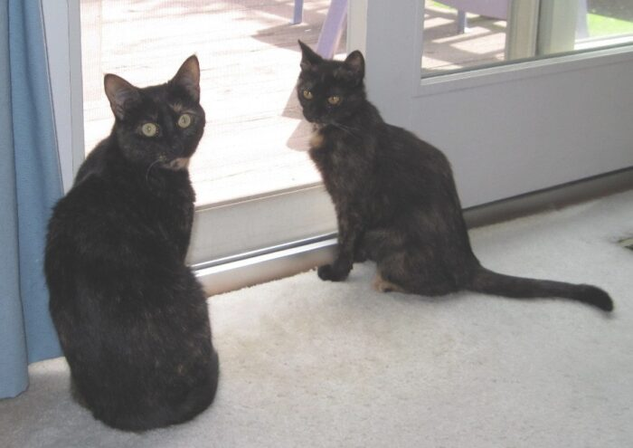 Alelgra and Ruby, The Conscious Cat