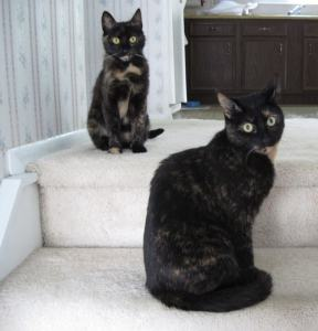 Allegra and Ruby on the stairs