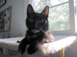 kitten cat on window perch
