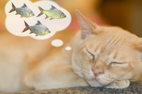 cat dreaming of fish