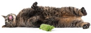 cat high on catnip