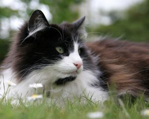 black and white cat with flowers
