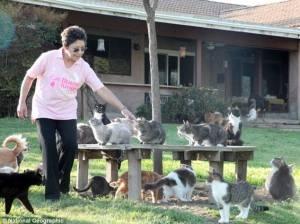 Cat House on the Kings cat sanctuary