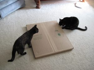 cats and boxes cats and cardboard boxes