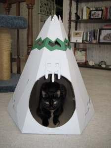 cat inside cat playhouse