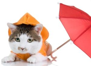 cat in the rain with umbrella