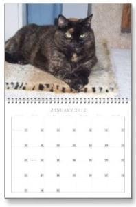 calendar Amber