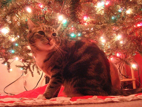 More toxic than poinsettias top 5 holiday cat hazards Christmas tree cat tower