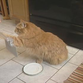 Sullivan cat who can read smart cat