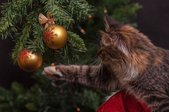 cat-christmas-decorations