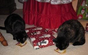 cats-eggnogg-treat